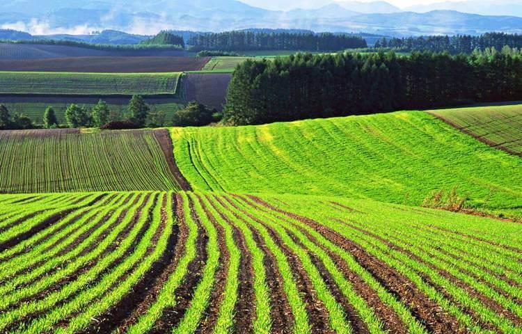 Земля сельхозназначения под садоводство можно строить дом